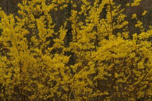 HM_spring_flowers_(3500759135)